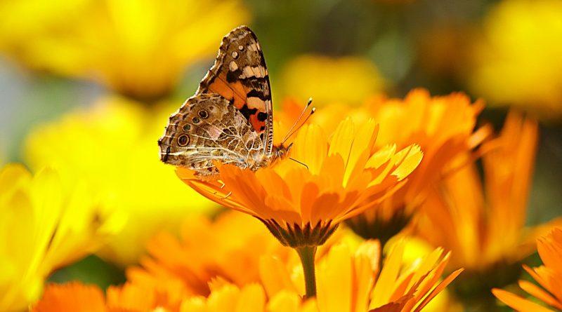 Hyvää, virkistävää ja siunattua kesää! Seurakunnan kesän toiminta näkyy Tulevat tilaisuudet -kohdasta.                             Kuva: Pixabay